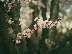 日升日落让人感到伤感的说说 时间和爱情带给我们的忧伤伤感说说