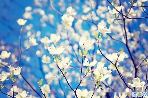 2019春分朋友圈早安祝福语带图片 春分唯美说说简单一句话4