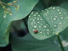 2019谷雨节气朋友圈早安心语 谷雨美好心情说说