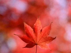 描写秋天的句子优美带图片 秋天到了微信心情说说