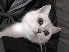 微信朋友圈晒宠物说说带图片 宠物说说可爱配图