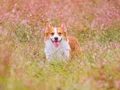 晒狗狗的文案带图片 日常朋友圈撸狗说说