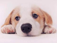 养狗的心情说说 遛狗朋友圈文案