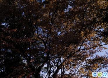 最新收集有關秋天的句子 切充滿希望溫柔又熱烈7