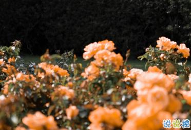 最新收集有關秋天的句子 切充滿希望溫柔又熱烈14