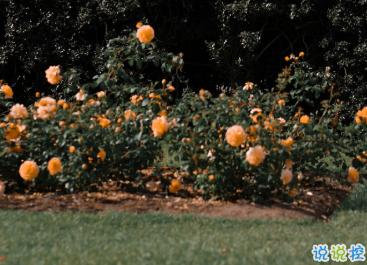 最新收集有關秋天的句子 切充滿希望溫柔又熱烈15