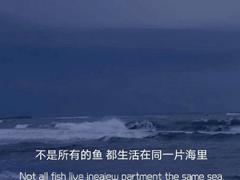 向往大海簡短治愈朋友圈文案 描寫大海的驚艷文案