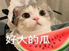 吃瓜人朋友圈说说怎么发 微博吃瓜人有趣说说带图片