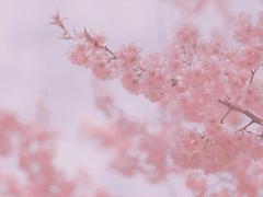 春节给领导的拜年祝福短信 除夕夜给领导的拜年贺词句子