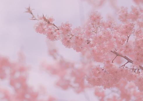 春节给领导的拜年祝福短信 除夕夜给领导的拜年贺词句子2