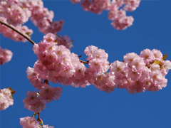 2021春天赏花的心情说说 春日赏花拍照的唯美句子