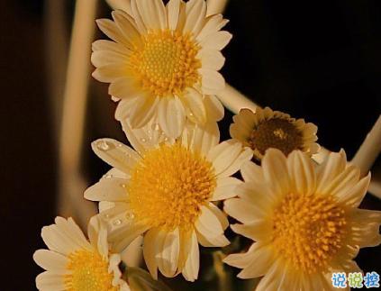 朋友圈晒花朵的优美文案 关于晒花朵的朋友圈7