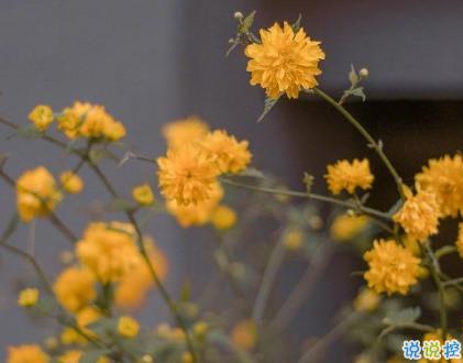 朋友圈晒花朵的优美文案 关于晒花朵的朋友圈8
