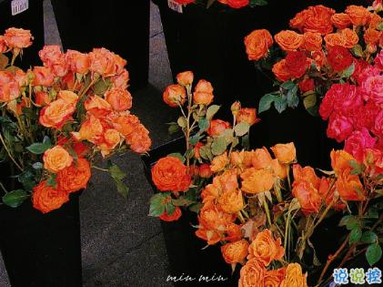 朋友圈晒花朵的优美文案 关于晒花朵的朋友圈10