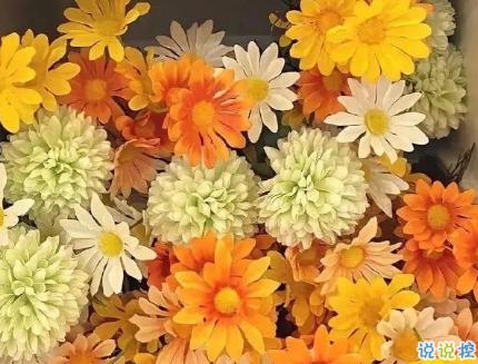 朋友圈晒花朵的优美文案 关于晒花朵的朋友圈13