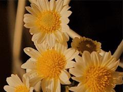 朋友圈晒花朵的优美文案 关于晒花朵的朋友圈