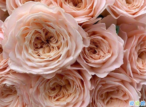 浪漫治愈的鲜花案牍 花店走心的唯美案牍1
