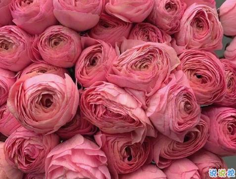 浪漫治愈的鲜花案牍 花店走心的唯美案牍2
