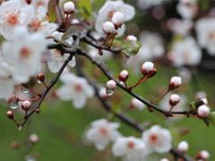 赞美春雨的优美句子 描写春雨的唯美文案