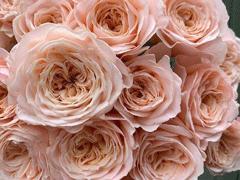 浪漫治愈的鲜花文案 花店走心的唯美文案