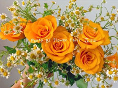 带有玫瑰文字的浪漫朋友圈文案 很文艺的关于玫瑰的文案
