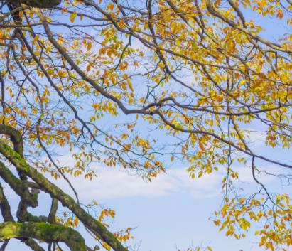 关于秋季落叶的伤感说说 秋季描写落叶的伤感文案2