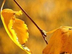 期待秋天早一点到来的心情说说 赞美秋天的说说短句