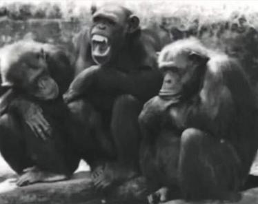 最近很火的18000年前猿人的搞笑文案带图片 让人意想不到的沙雕句子2