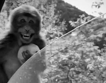 最近很火的18000年前猿人的搞笑文案带图片 让人意想不到的沙雕句子4