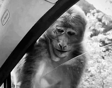 最近很火的18000年前猿人的搞笑文案带图片 让人意想不到的沙雕句子11