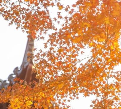 秋季降温的文案带图片 秋季降温问候语的文案8