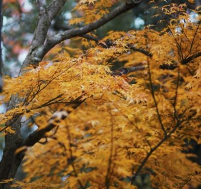 秋季降温的文案带图片 秋季降温问候语的文案11