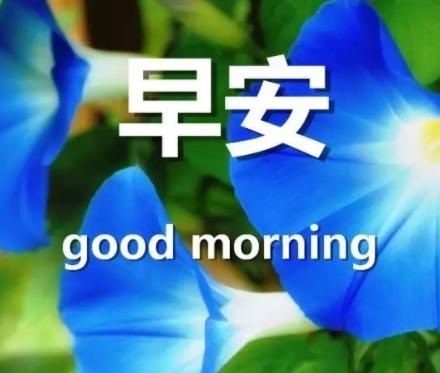 必评论必点赞的经典早安说说 很舒心的精致的早安心语