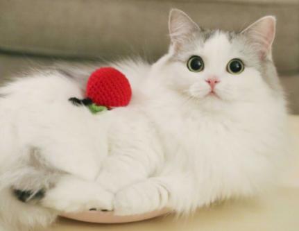 关于猫咪的可爱的暖心文案 晒小猫咪的可爱的句子